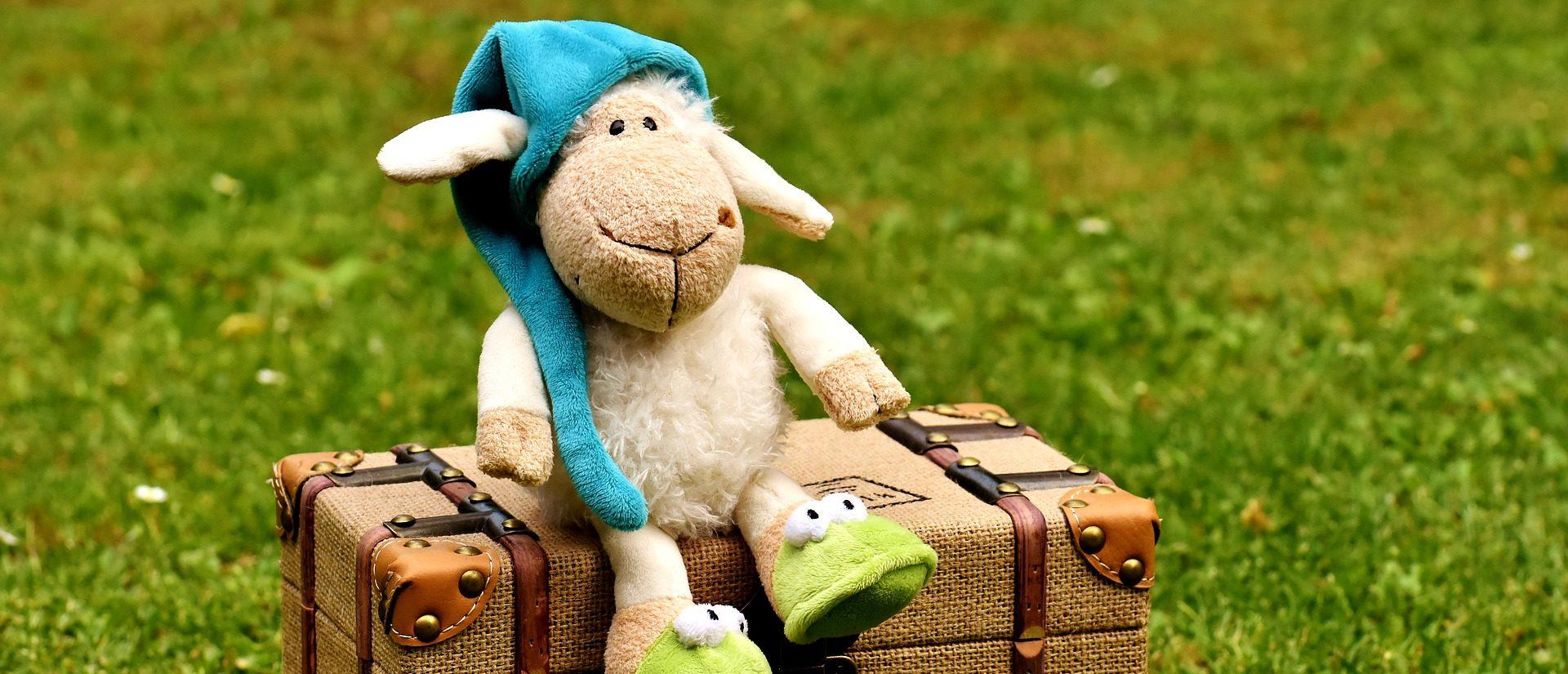 owca nawalizce
